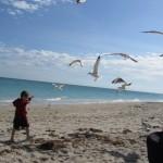 half size seagulls IMG_0180_1391