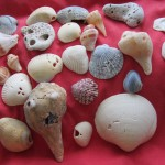Collect your shells and rocks w holes